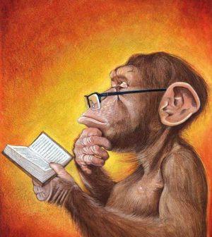 scimmia darwinista